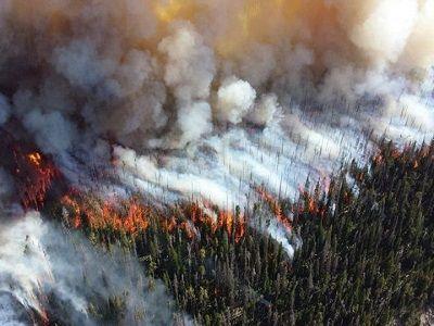 В трёх регионах Сибири ввели режим ЧС из-за пожаров
