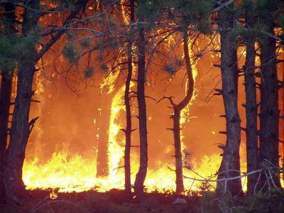 Более ста населённых пунктов Иркутской области накрыло смогом от пожаров