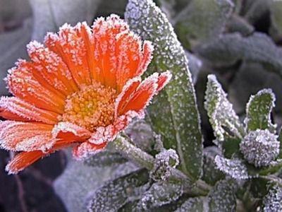 Синоптики предупредили жителей России о заморозках