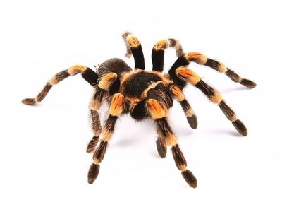 Scientists have Identified Creatures that Cause the Greatest Fear in Humans