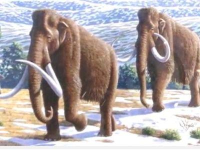 В Подмосковье обнаружили останки мамонта