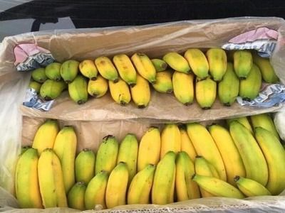 Ecuador Declared Interest in Maintaining the Supply of Its Bananas in Russia