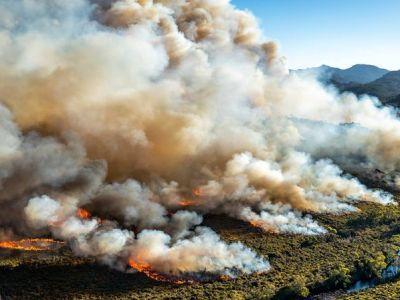 Посчитан ущерб от масштабных пожаров в Австралии