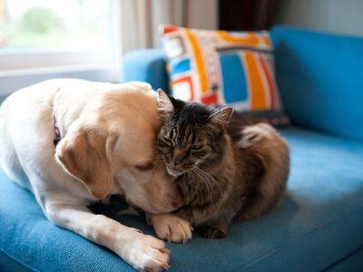 В России предлагают запретить изымать домашних животных за долги