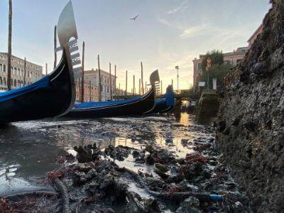 В Венеции пересохли водные каналы  Corriere del Veneto