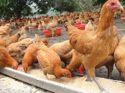 Bird Flu Outbreak Occurred in China