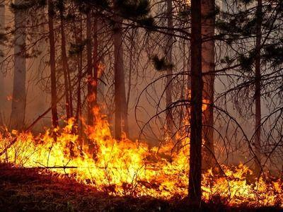 Greenpeace предупредил о риске катастрофических лесных пожаров в европейской части РФ