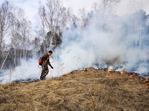 В Красноярском крае ликвидировали первый лесной пожар