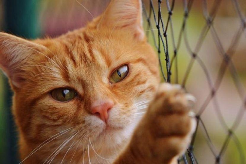 Ветеринары Москвы предупредили о риске заражения коронавирусом домашних животных