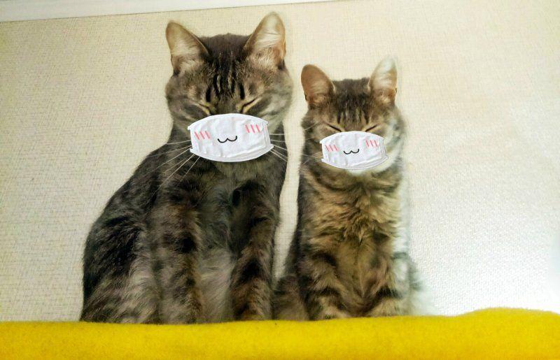 Роспотребнадзор всерьёз заинтересовался возможностью заразиться COVID от кошек