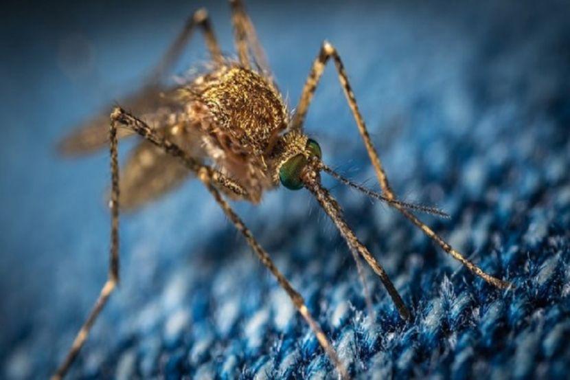 Учёные объяснили, можно ли заразиться коронавирусом откомаров
